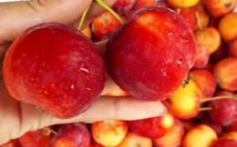 Táo cherry Trung Quốc gây sốt ở chợ Việt