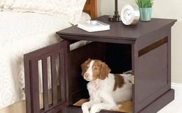 Giải pháp để nuôi 'pet' trong nhà có không gian nhỏ hẹp