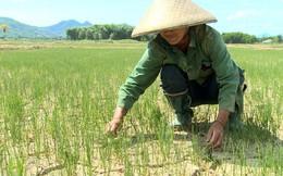 Biến đổi khí hậu tác động tới tăng trưởng kinh tế của Việt Nam