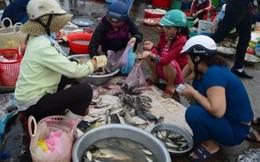 Người nội trợ tẩy chay cá biển vì sợ nhiễm độc