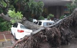 Bão số 3 gây đổ cây, mất điện nhiều nơi