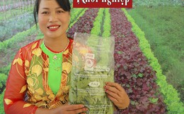 Mạnh dạn thay đổi, trồng rau hữu cơ để khách hàng tự tìm đến với mình