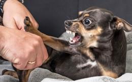 Dạy trẻ cách thoát hiểm khi bị chó tấn công