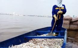 Hà Nội công bố 4 nguyên nhân khiến cá chết ở hàng loạt ao hồ