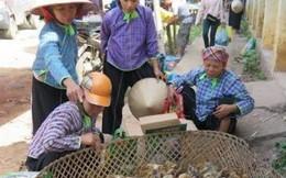 Bán công khai giống gia cầm Trung Quốc nhập lậu