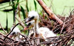 U Minh Thượng trở thành khu Ramsar thế giới