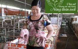 Cô giáo người Tày làm giàu từ 2 con heo nuôi trong bếp