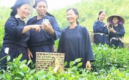 Ngân hàng trên điện thoại tạo quyền năng kinh tế cho phụ nữ, người thu nhập thấp