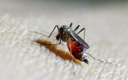 Một phụ nữ Hàn Quốc nhiễm virus Zika sau khi du lịch Thái Lan