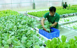 ASEAN sắp có tiêu chuẩn chung về thực phẩm hữu cơ