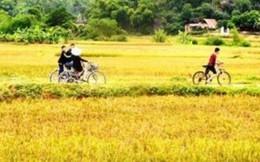 Thung lũng Mai Châu nơi lý tưởng để sống chậm