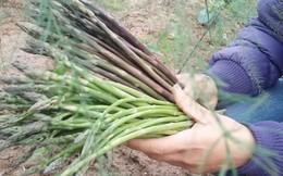 70 nghìn đã mua được 1kg 'trợ thủ giảm cân' măng tây