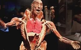 TPHCM họp bàn về triển lãm 'cơ thể người' gây tranh cãi