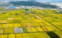 'Làng mới' và sự phát triển thần kì của Hàn Quốc (P10)