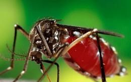 'Khả năng dịch Zika vào Việt Nam là cao'