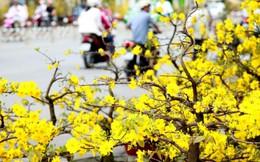 Tìm khoảng lặng giữa lòng Sài Gòn hối hả