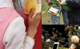 Cận cảnh phái đẹp 'hành hạ' hoa ở Lễ hội hoa hồng