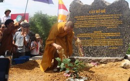 Chiết cây bồ đề thiêng hơn 2.000 tuổi về trồng tại chùa Tam Chúc