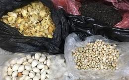 Tốn 6 triệu đồng mua 'hạt thuốc rừng' ở chùa Hương về nhà đổ bỏ
