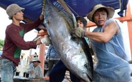 Chất lượng hải sản miền Trung chưa có lời giải