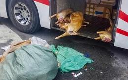 Hơn 220kg thịt dê 'bẩn' chuẩn bị vào quán nhậu thì bị bắt giữ