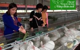 3 mô hình phụ nữ làm kinh tế tiêu biểu tại Vũ Đông
