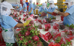 Chất lượng và an toàn thực phẩm: Vấn đề tiên quyết khi xuất nông sản sang EU