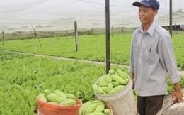 Xã nông thôn mới kiểu mẫu phải đảm bảo an toàn thực phẩm