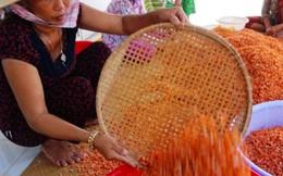 Ðầm Dơi (Cà Mau) nhộn nhịp mùa tôm khô Tết