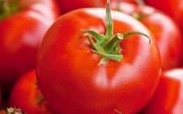 5 dấu hiệu phân biệt cà chua Việt Nam-cà chua Trung Quốc