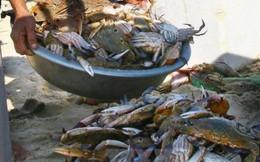 Thêm nhiều mẫu cá, ghẹ ở Hà Tĩnh nhiễm phenol, cyanua