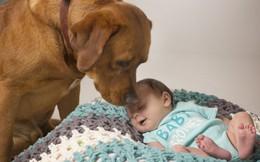 5 cách giữ an toàn khi nuôi thú cưng trong gia đình