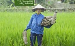Nữ nông dân thu 2,8 tỷ/năm từ con rươi, con cáy