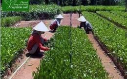 Phụ nữ Nghĩa Hành: 8 tiêu chí góp phần đổi mới bộ mặt nông thôn