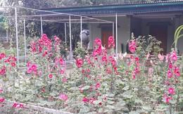 Phong trào nhà nông trồng hoa chơi Tết ở Con Cuông