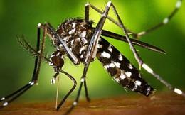 TPHCM: Gần 50 trường hợp nhiễm virus Zika