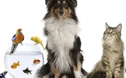 3 nguy hiểm rình rập khi nuôi thú cưng trong nhà