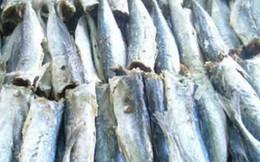 Tiêu hủy 70 tấn cá tồn kho sau sự cố Formosa