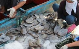 Ngư dân miền Trung: 'Lộc biển' mang lại tiền tỉ ngày đầu năm