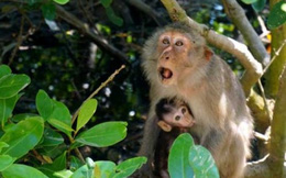 Cuộc sống muôn màu nơi Đảo Khỉ