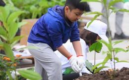 Trồng mới hơn 5.000 cây xanh cho Hà Nội
