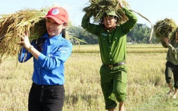 Thanh niên, công an cùng xuống đồng giúp dân gặt lúa chạy lũ