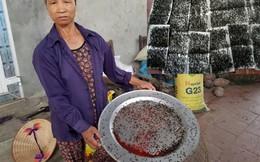 """Người dân khu bãi rác Nam Sơn: """"Thu hoạch"""" 5kg ruồi/tuần"""