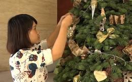 Người Sài Gòn bỏ tiền triệu mua cây thông thật chơi Noel