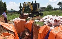 Đồng Nai: Tiêu hủy hơn 4 tấn thịt lợn nhiễm dịch tả lợn châu Phi