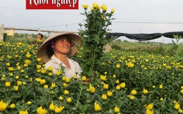 Thoát nghèo nhờ 'ép đất' nở hoa