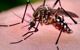 Đây là lý do người nhiễm virus Zika đều ở khu vực phía Nam
