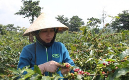 WEF ASEAN và ứng dụng cách mạng công nghệ 4.0 vào sản xuất nông nghiệp