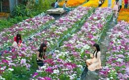 Đến Đồng Tháp chiêm ngưỡng thác hoa tươi lớn nhất Việt Nam