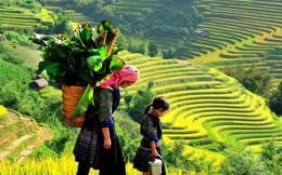 Lào Cai phát triển mạnh ngành dịch vụ, du lịch